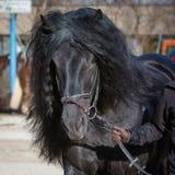Melena del caballo Fotos de archivo libres de regalías