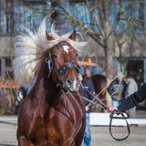Melena del caballo Fotografía de archivo