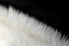 Melena del caballo blanco Imágenes de archivo libres de regalías