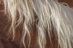 Melena rubia del caballo Fotos de archivo