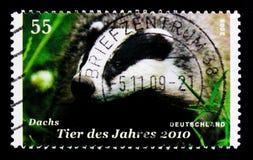 Meles europeo del Meles del tasso, animale dell'anno per serie 2010, circa 2009 Immagine Stock Libera da Diritti