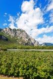 Meleti in valle di Sarca - Trentino Italia Fotografia Stock Libera da Diritti