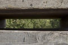 Meleto attraverso le stecche di legno del recipiente Immagine Stock