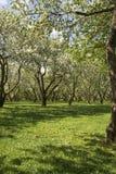 Meleto In primavera Fotografia Stock Libera da Diritti