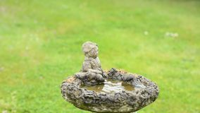 Melharuco azul euro-asiático que toma um banho video estoque