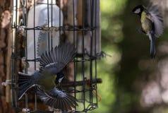 Melharucos dos pássaros Imagem de Stock