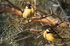 Melharucos nas madeiras no inverno foto de stock royalty free