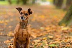Melhor amigo no mais forrest Foto de Stock