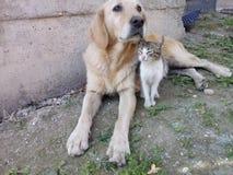 melhores amigos do cão e gato Fotos de Stock