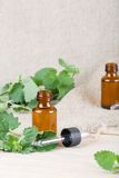 Melissa essential oil Royalty Free Stock Photos