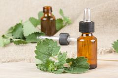 Melissa essential oil Royalty Free Stock Images