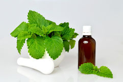 Melissa essential oil stock photography