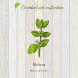 Melissa, etherische olieetiket, aromatische plant Stock Afbeeldingen