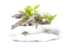 Melissa flower on a towel.  Royalty Free Stock Image