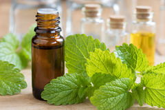 Melissa lemon balm essential oil with fresh melissa leaves Royalty Free Stock Photos