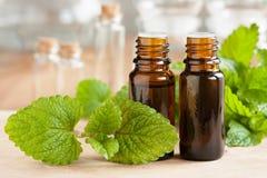 Melissa lemon balm essential oil - two bottles with fresh melissa leaves royalty free stock photos
