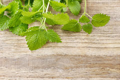 Melissa lemon balm leaves on wooden table. Healthy spice stock images