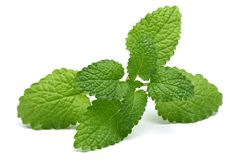 Melissa, lemon balm on white background. Melissa, lemon balm isolated on white background stock photos