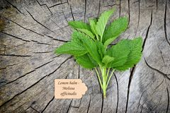 Melissa. Officinalis on old wooden background royalty free stock photo