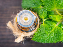 Melissa or mint essential oil stock photo