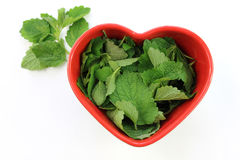 Melissa officinalis in heart. Melissa officinalis leaves lying in a heart shaped dish on a white background stock photos