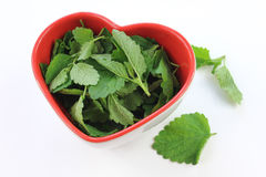 Melissa officinalis in heart. Melissa officinalis leaves lying in a heart shaped dish on a white background royalty free stock photo