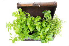 Melissa, thyme and basil in an old box Royalty Free Stock Photography