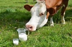 Melk en koeien Royalty-vrije Stock Foto's