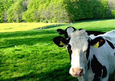 melk fabriek royalty-vrije stock foto