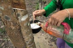 Melk van rubberboom Royalty-vrije Stock Afbeeldingen