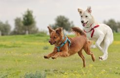 Melkachtig de hond royalty-vrije stock foto's