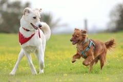 Melkachtig de hond royalty-vrije stock afbeeldingen