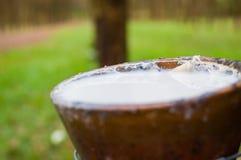 Melkachtig latex dat uit rubberboomhevea Brasiliensis als bron van natuurrubber wordt gehaald stock afbeeldingen