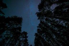 Melkachtige manier met bomen stock fotografie