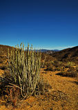 Melkbos - Namaqua国家公园 免版税图库摄影