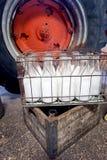 Melkflessen in krat Stock Afbeelding