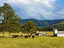 Melkveehouderij in platteland Royalty-vrije Stock Afbeeldingen