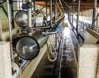 Melkveehouderijverrichting in Nieuw Zeeland stock afbeelding