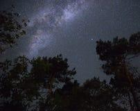 Melkweg in de nachthemel over het bos Stock Afbeeldingen