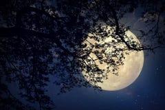 Melkwegster in nachthemel, volle maan en oude boom Stock Afbeelding