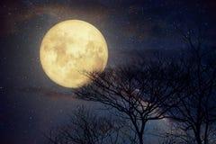 Melkwegster in nachthemel, volle maan en oude boom Royalty-vrije Stock Foto