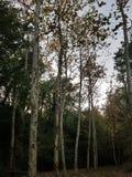 Mellan ensamheten av skogen arkivfoton