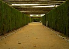Mellan trees Royaltyfria Foton