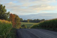 Mellan två cornfields Royaltyfri Fotografi