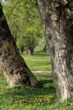 Mellan två träd Royaltyfri Fotografi