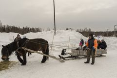 Mellansel,Sweden - Mars 07,2018:Refugees trying an old way of tr. Ansportation on a field day in Mellansel, Sweden on March 07, 2018 Stock Photo