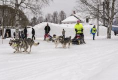 Mellansel Szwecja, Mars, - 07,2018: Dorosli i dzieci jadą psa s Obraz Stock