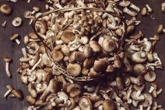 Mellea Armillaria αγαρικών μελιού μανιταριών στον ξύλινο πίνακα Στοκ φωτογραφίες με δικαίωμα ελεύθερης χρήσης