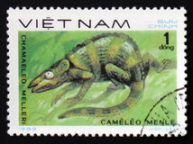 Meller`s Chameleon Chamaeleo melleri, circa 1983. MOSCOW, RUSSIA - FEBRUARY 12, 2017: A Stamp printed in VIETNAM shows the image of a Meller`s Chameleon with the Royalty Free Stock Image