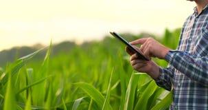 Mellersta plansidosikt: Manlig bonde med minnestavladatoren som kontrollerar växter i fältet och pressarna hans fingrar på stock video